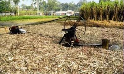 গোবিন্দগঞ্জে আখচাষীরা বিপাকে