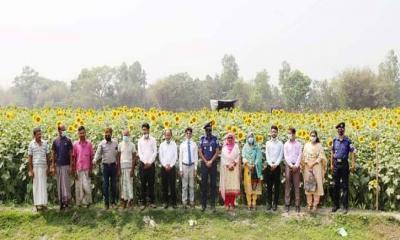নীলফামারীতে সূর্যমুখী চাষে উদ্বুদ্ধ করতে কৃষক সমাবেশ