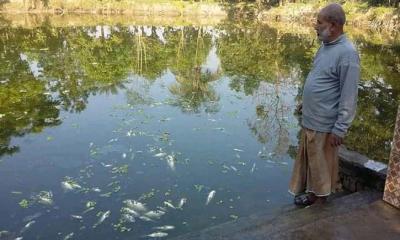 লালপুরে দফায় দফায় পুকুরে বিষ দিয়ে আড়াই লাখ টাকার মাছ নিধন