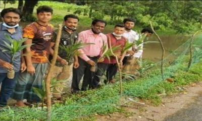 নোয়াখালী জেলা ছাত্রলীগ সহ-সভাপতির উদ্যোগে বৃক্ষরোপণ কর্মসূচি