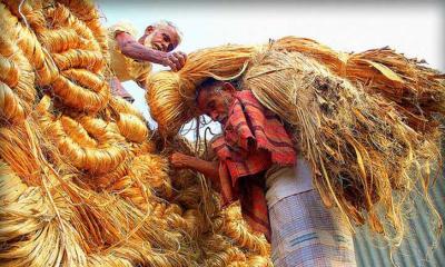 পাট বাজারে দরপতন, হতাশায় কৃষক