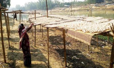 নারীদের তৈরি কুমড়ো বড়ির কদর সারাদেশে