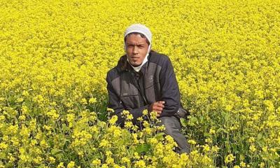 নরসিংদীতে খোরশেদ মিয়ার জমিতে সরিষার বাম্পার ফলন