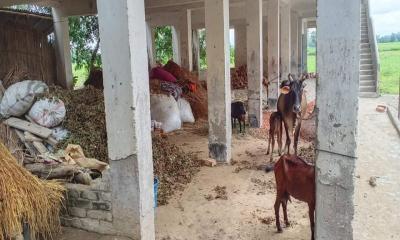 শিক্ষা প্রতিষ্ঠান নয় যেন গোয়াল ঘর