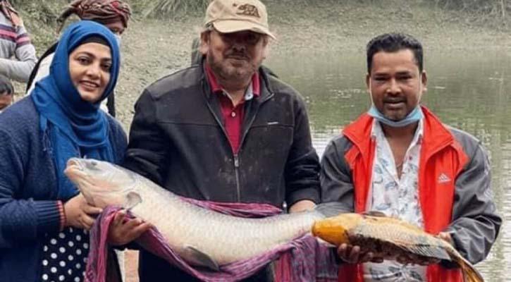 বিশাল মাছ চিতল বোয়াল ধরা পড়ছে নাঈম-শাবনাজের পুকুরে