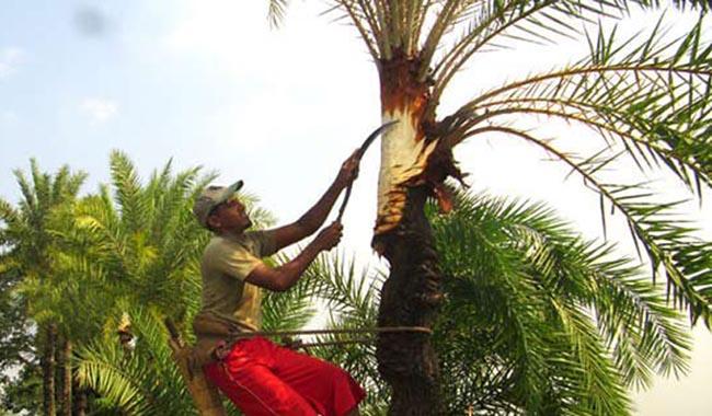 Treebg_banglanews24_380296357